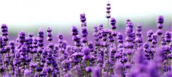 Massage-aromatherapy-690x310